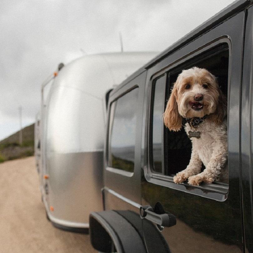 road-dog-transport