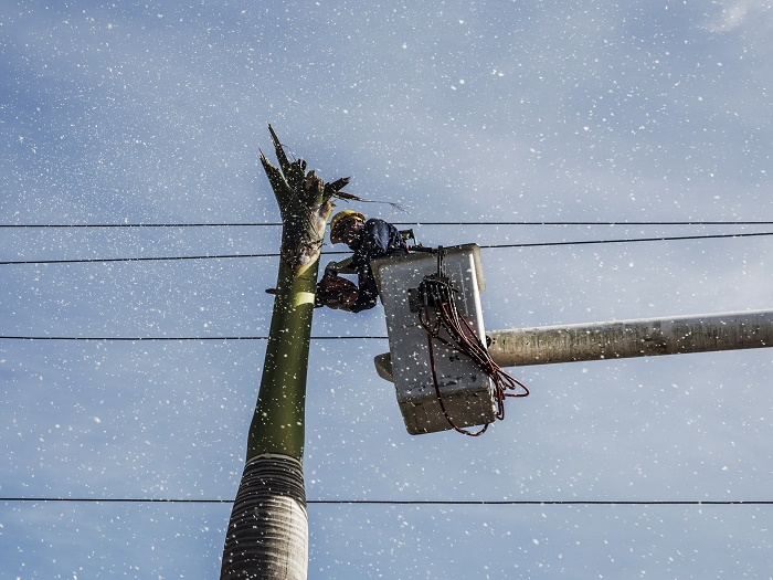 powerline-clearing-1