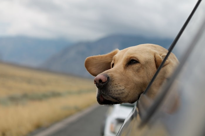 travel dog accessories