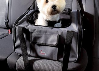 dog inside the car in portable dog carrier