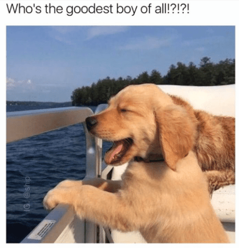 dog whos the goodest boy of all g ship