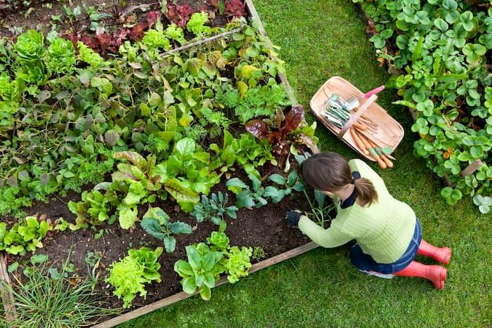 planting-plants