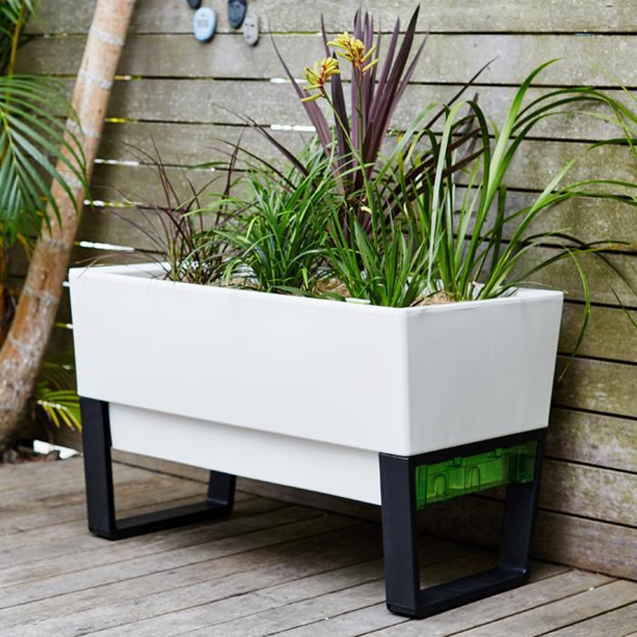 self-watering-plant