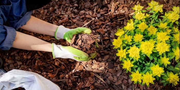 garden mulching