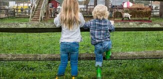 two kids looking at the cows on the farm