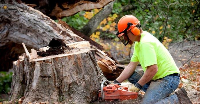 professional arborist tree removal