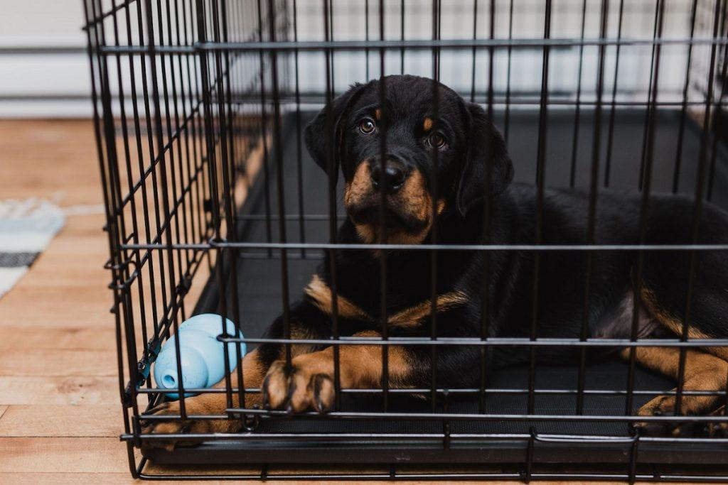 dog crate indoor