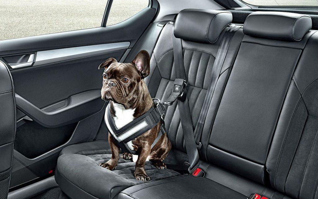dog seat belt safe accessories