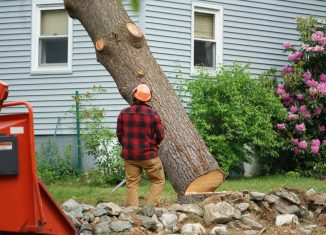 Mature Tree Removal