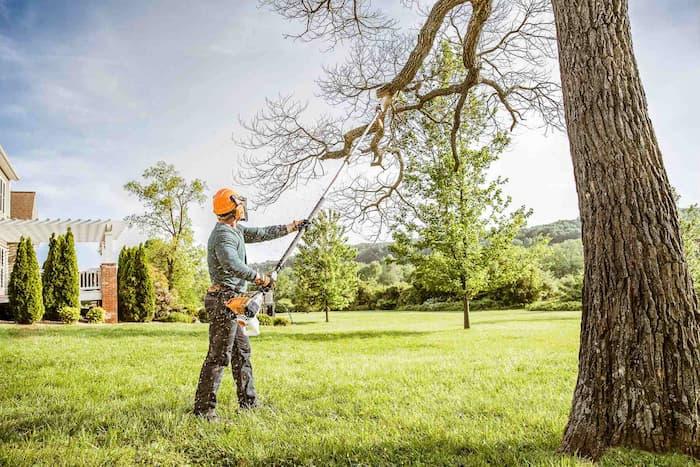 Stihl pruning