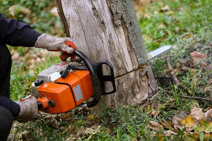 cutting tree down with chainsaw