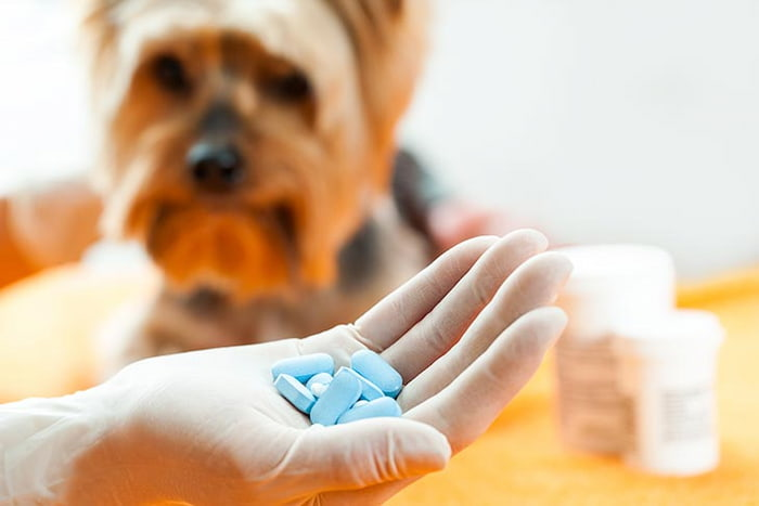 pills for dogs